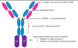 Antibody Drug Conjugates in New Studies