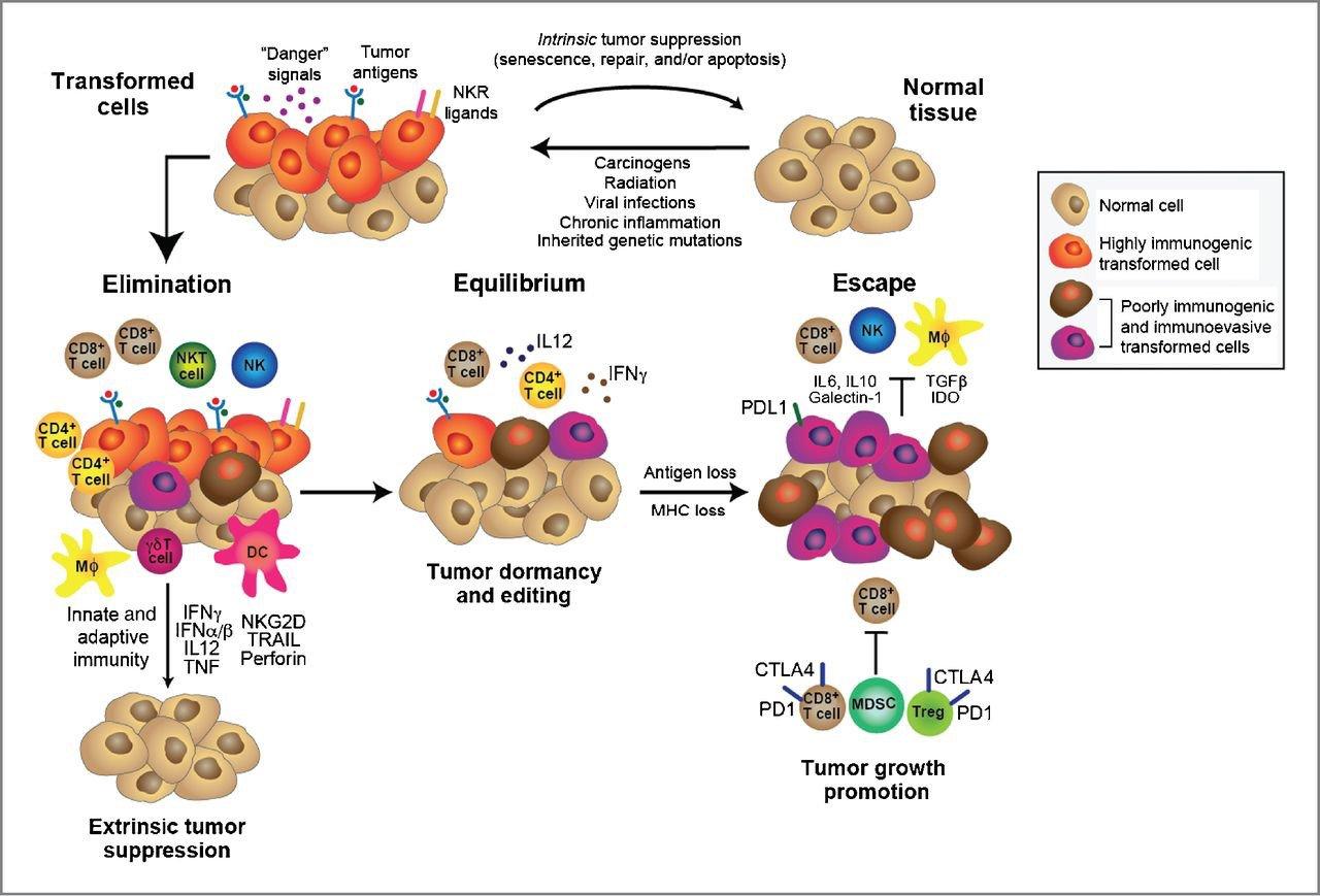 ImmunotherapyBT Figure3.jpg